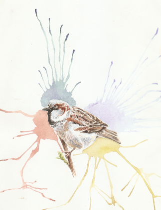 sparrow splash 2013