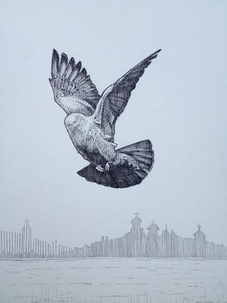 headless pigeon 2015