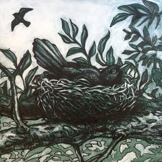 blackbird nesting 2017