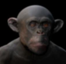 chimp-paint.jpg
