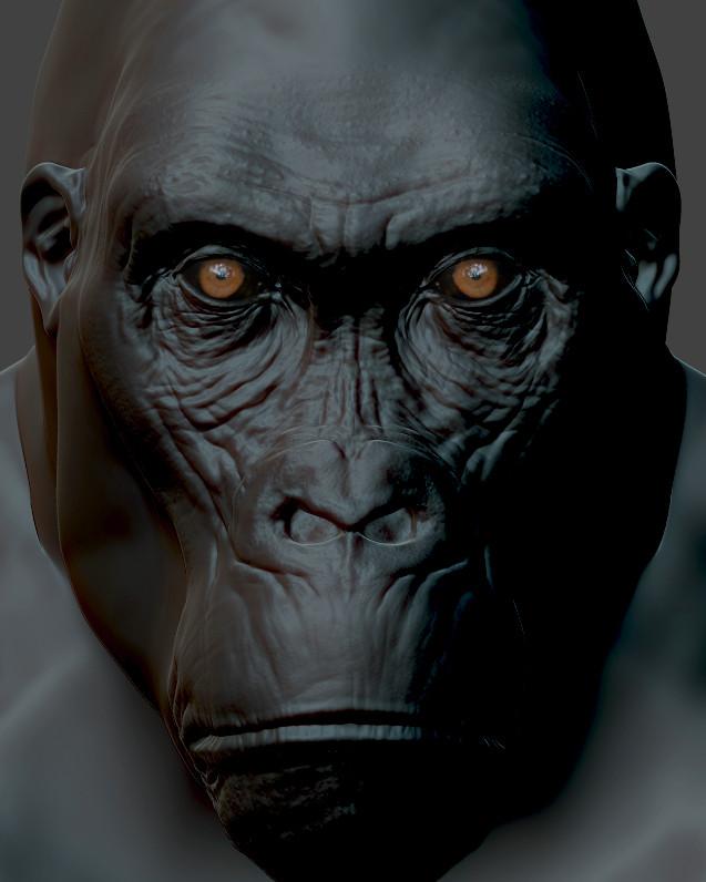 gorilla-eyes-3.jpg