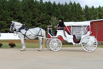 southern-cross-ranch-covered-horse-carri