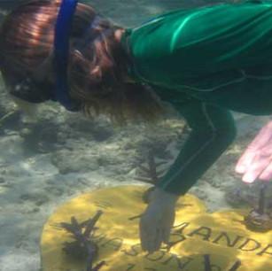 Высаживание и выращивание кораллов. The Oberoi Lombok.