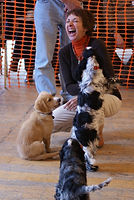 Dog Training Mentor - Pia