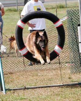 Pia dog agility training