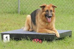 Training Reactive Dog