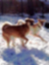 Training dog with dog aggression