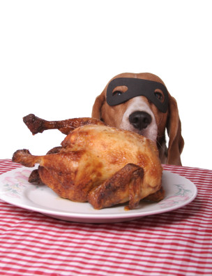 Bandit dog gets chicken