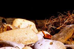 phoebe in a pit of weeds, rocks, debris