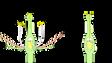 裸子植物は水素ひま