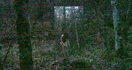perso forêt 1 - copie 2.jpg