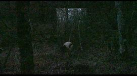 perso forêt 3 bis bis .jpg