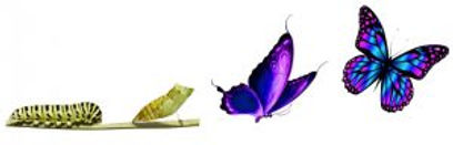 butterfly-transformation-300x96.jpg