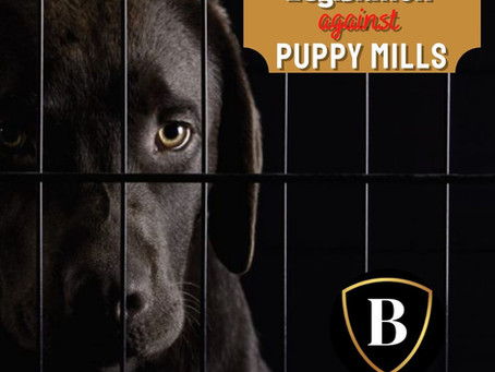 Legislation against Puppy Mills