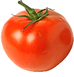 tomato for healty diet  and disease prevention