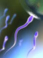 витамин С улучшает качество спермы