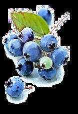 healthy diet / blueberries