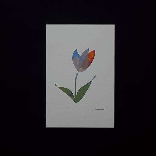 minimal ポストカード flowers 6枚セット