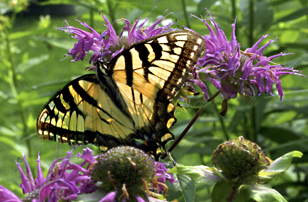 butterflyone