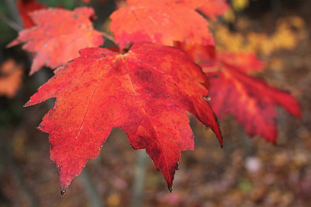 leavesone