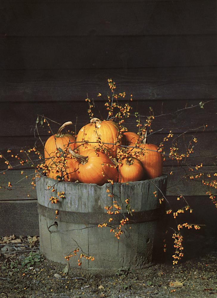 pumpkinsbarrel