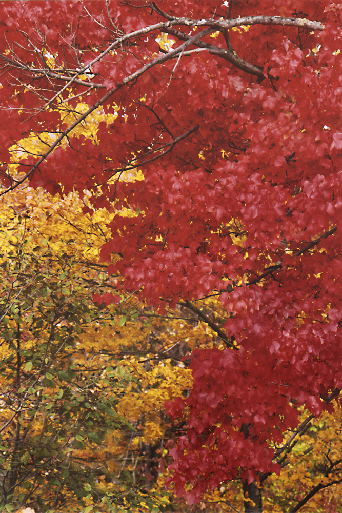 autumnone