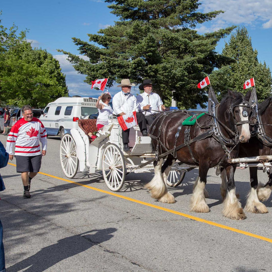 Canada Day with some beautiful horses!