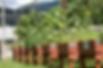 Screen Shot 2020-07-18 at 11.38.34 AM.pn