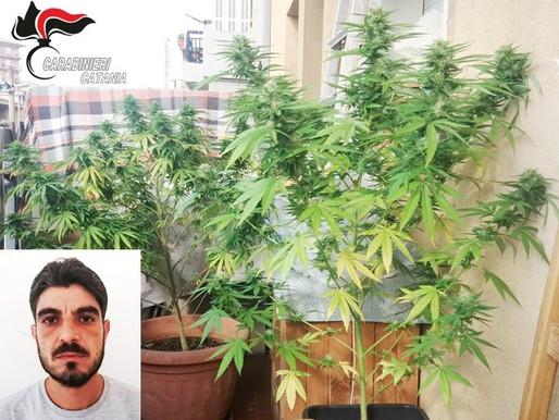 Piante di marijuana, cocaina, armi: sequestri e arresti per contrastare l'«economia della droga»