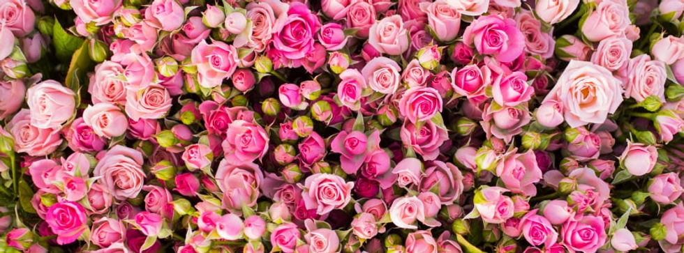 pink-roses-girly.jpg