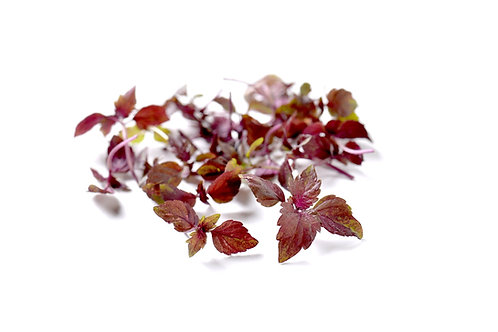 Shiso rosso