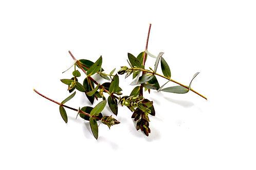 Punte di eucalipto