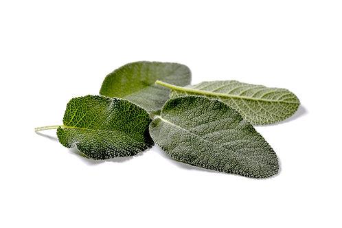 Salvia maxima