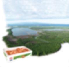 Gambas OSO BIO de Madagascar.jpg
