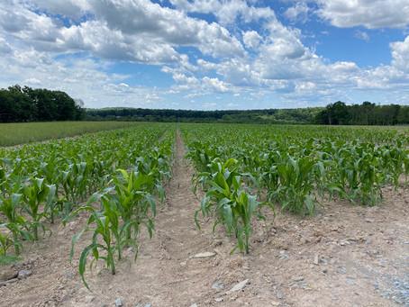 Let Us Take the Hard Work Out of Enjoying Farm Freshness