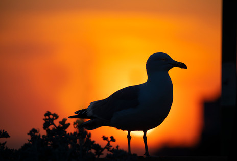 Watch the sunset with friendly visitors - so many golden moments to cherish