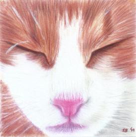 Pink nose cat miniature