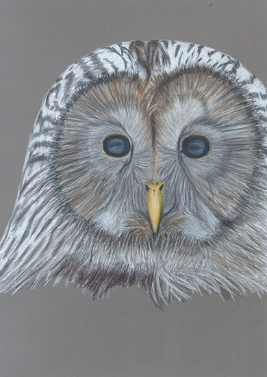 Owl Limited Edition Signed Print