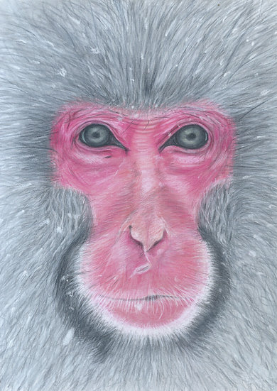 Snow Monkey Limited Edition Signed Print