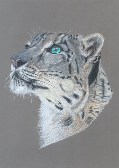 Snow Leopard Limited Edition Signed Print