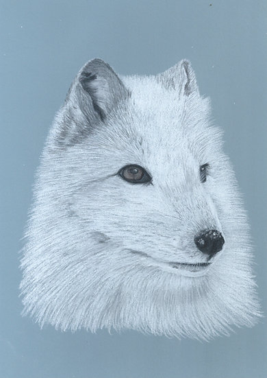 Arctic Fox Limited Edition Signed Print