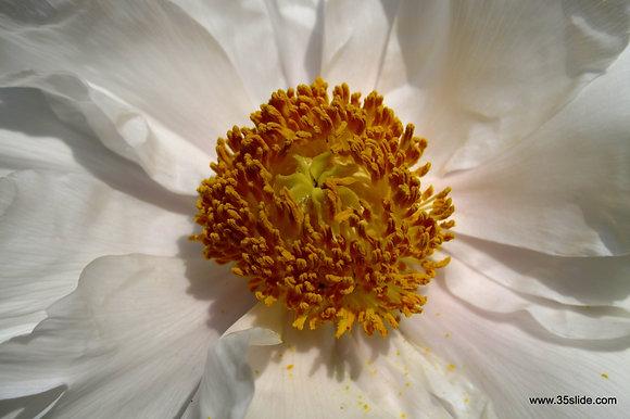Bloom, Japan