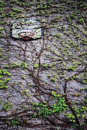 Nature Rebounds, France