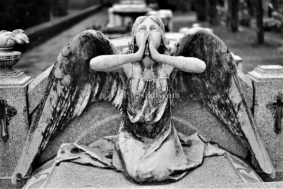 Heralding Angel, Italy
