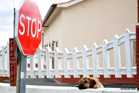 Stop! (And Pet Me), Portugal