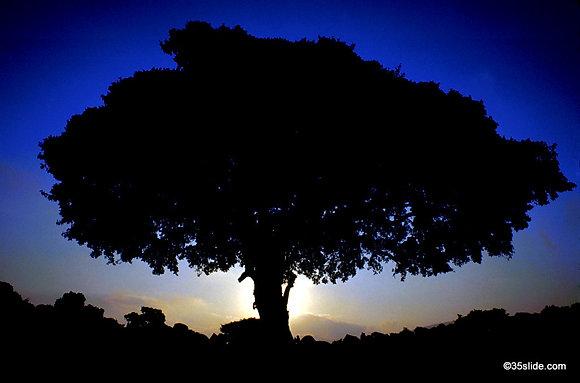 Tree at Sunset, Tanzania