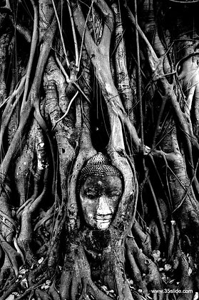 Buddha Entangled, Thailand