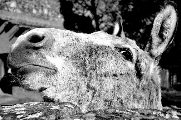 Monastery Donkey, France