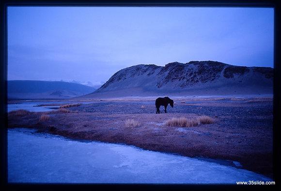 Wild Horse in Twilight, Mongolia