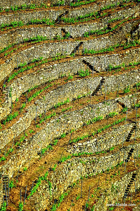 Terraced Vineyards, Spain